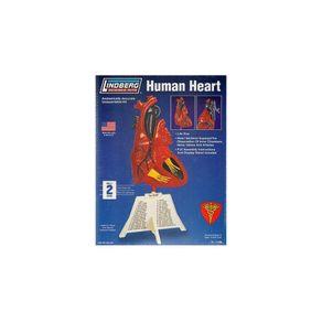 LIN71309-01-1-CORACAO-HUMANO-EM-TAMANHO-NATURAL